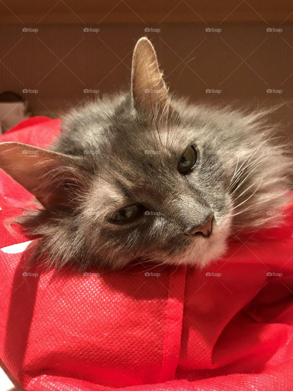 Cat sleeping on a bag