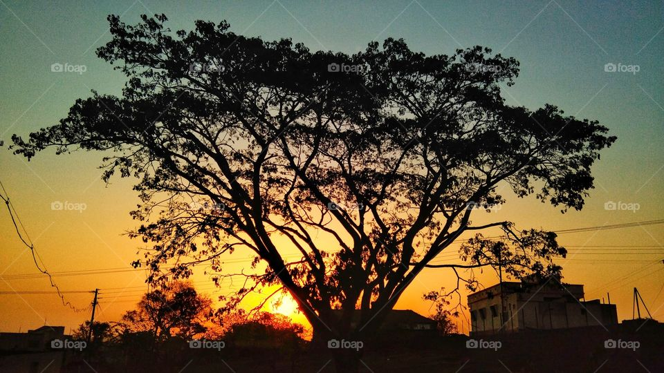 Sunrise - beautiful scenery with colourful sky, tree at Rural Area