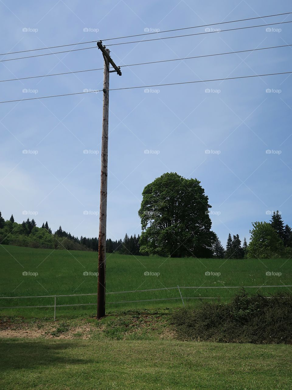 A power pole with a grand tree on a green hill in the background in Western Oregon on a sunny spring day.