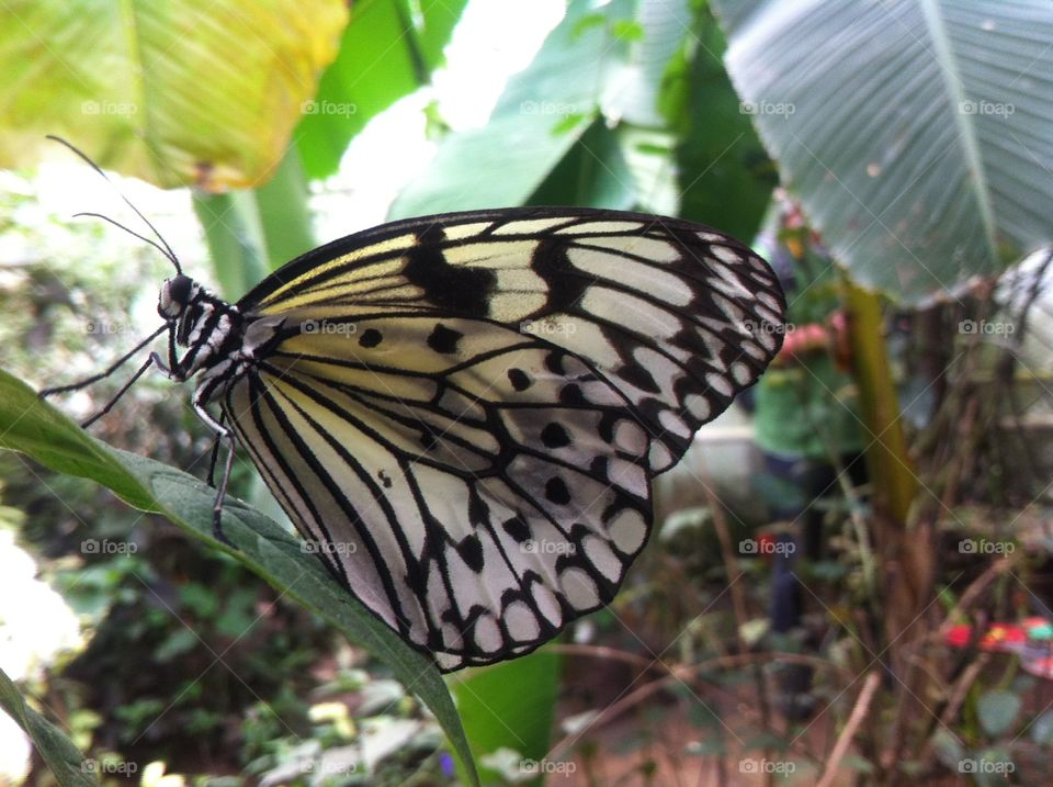 Paper kite. Black and white butterfly