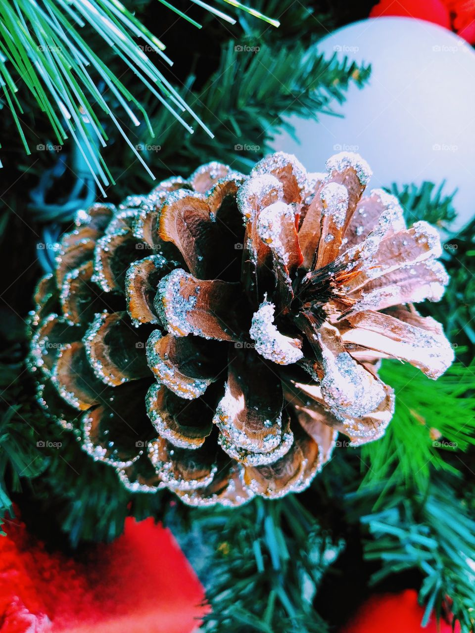 Christmas Decorations On Bruce Spruce Tree.