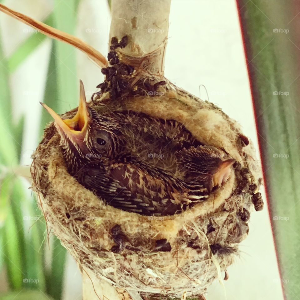 New to the world. Hummingbirds.