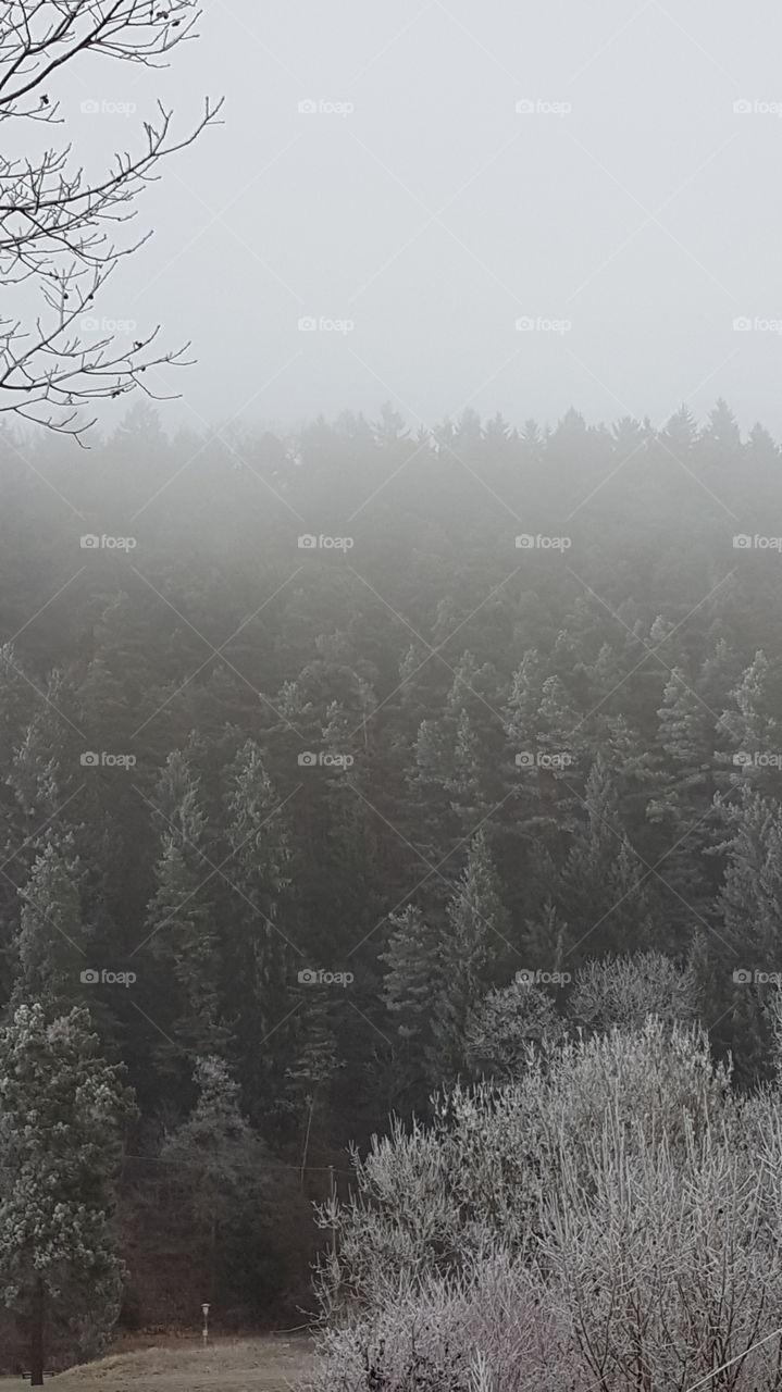 Winter ist langsam mal auch bei uns angekommen  siehe der Frost an den Bäumen