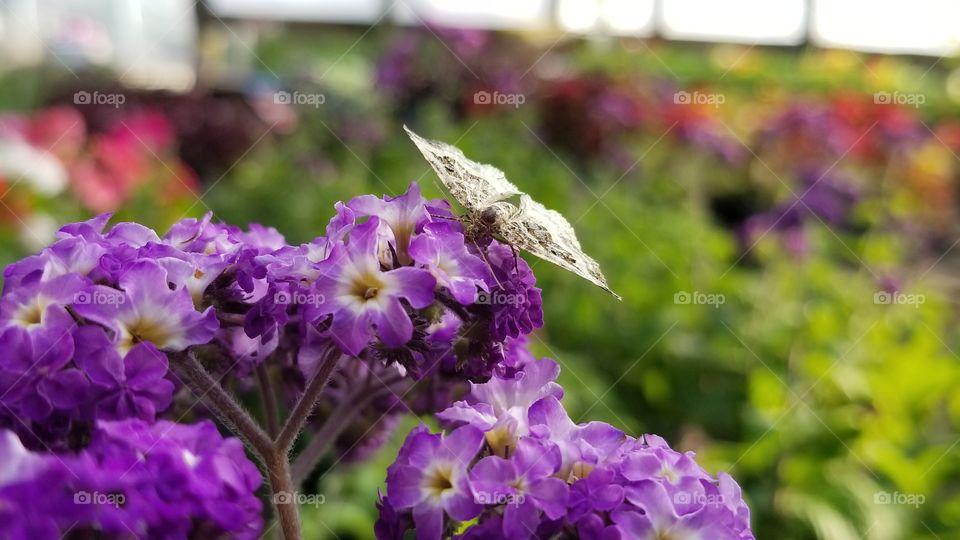 Delicate Petals, Delicate Wings