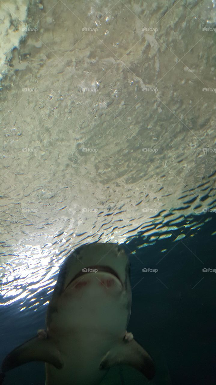 crazy things i done swim with shark's alone in mexico ocean