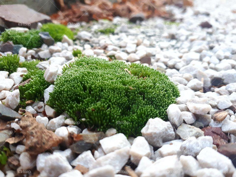 moss on sand