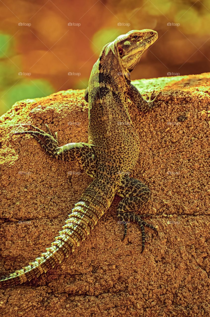 Brilliant disguise. A perfectly camouflaged lizard blends perfectly against it's background.