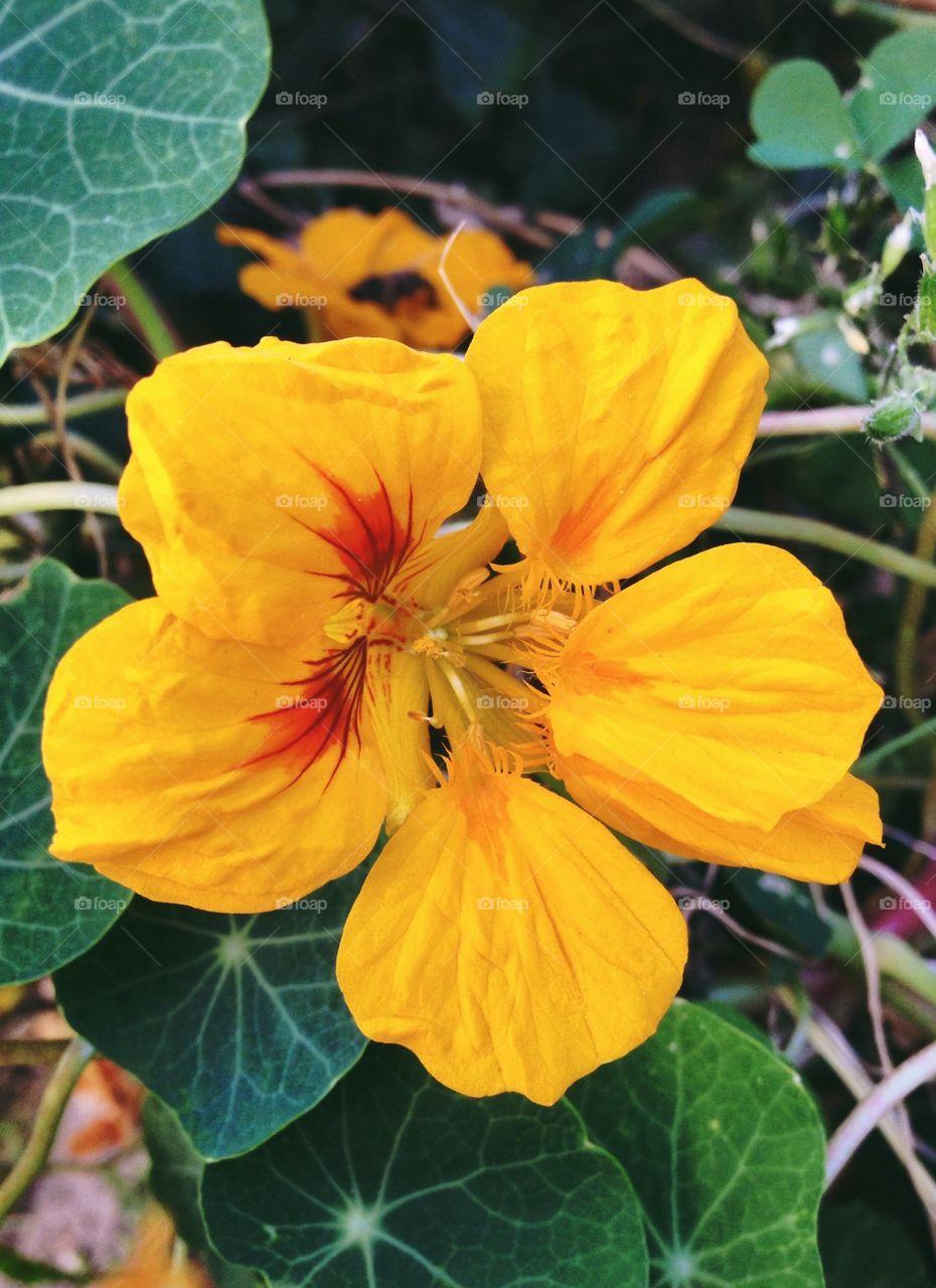 Flower . Yellow blossom