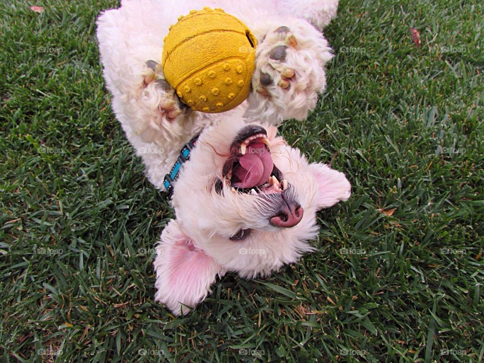 Happy Pup with Ball