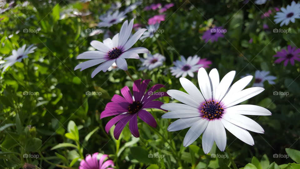 Purple and white flowers blooming in garden