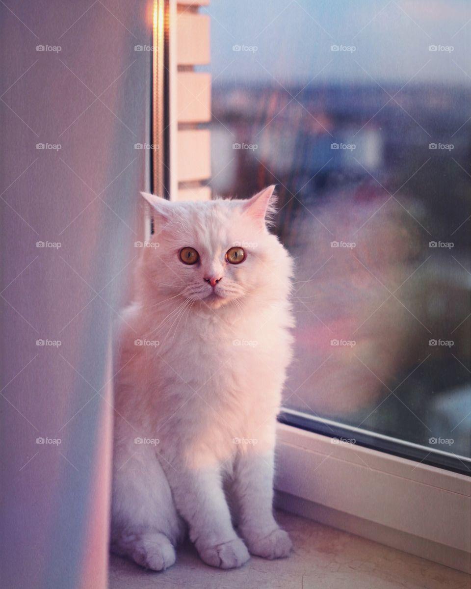 White cat sitting on window sill