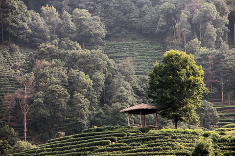 tea pavillion. A pavillion in the hangzhou tea plantation, China