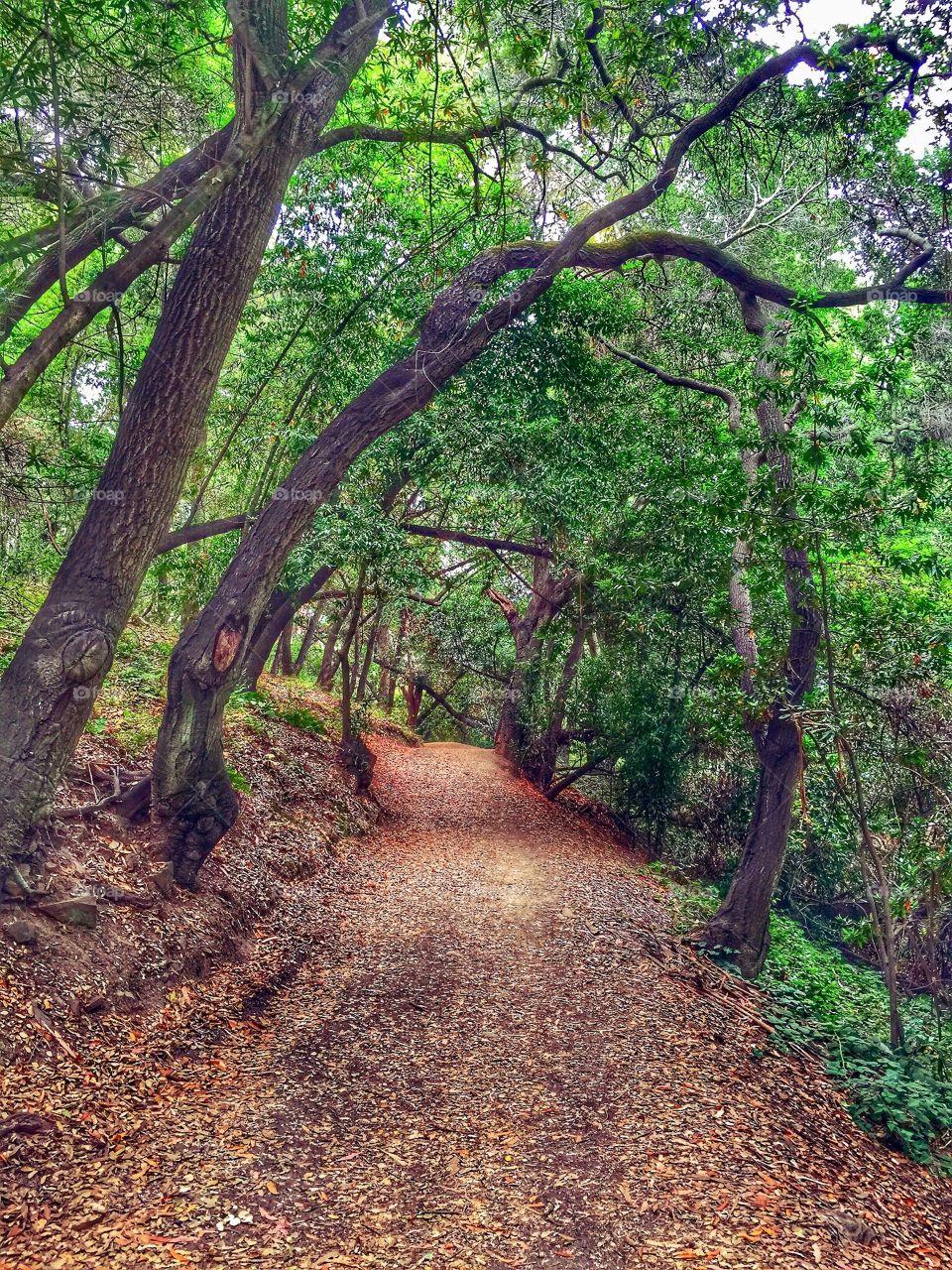 A beautiful autumn hiking trail in Northern California.