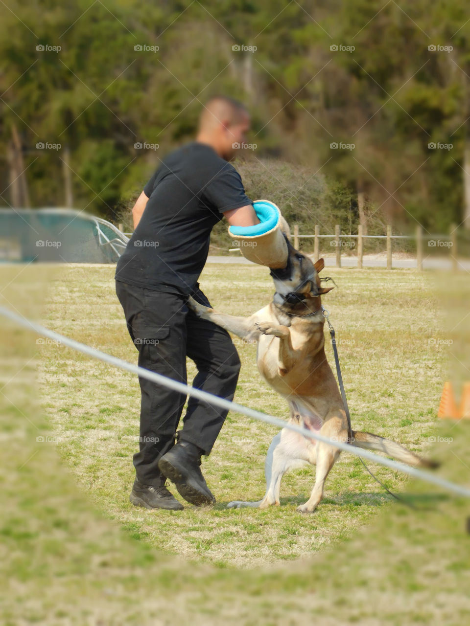 K9 dogs and their handlers prepare for their annual certification as they demonstrate their tactics!