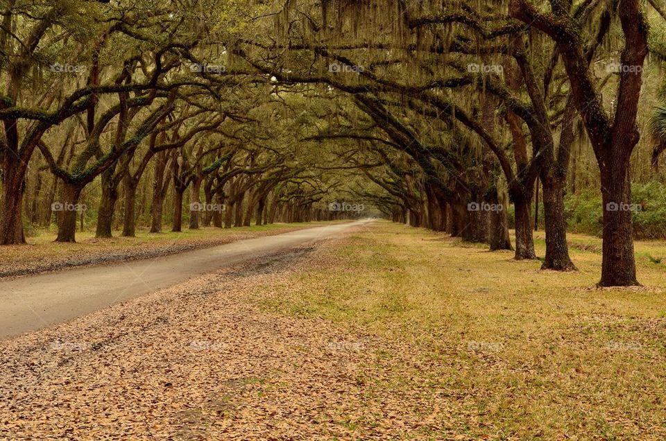 Tree line near roadside