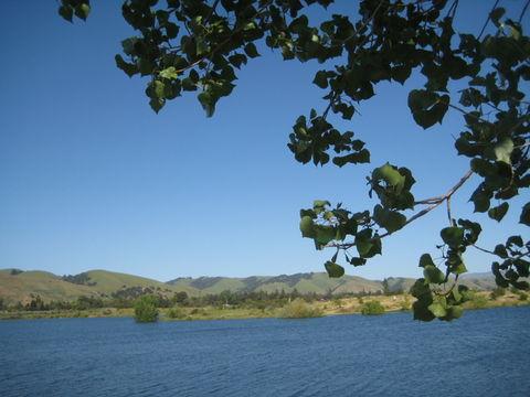 Blue lake green hills. Blue lake, green hills, blue sky and a tree
