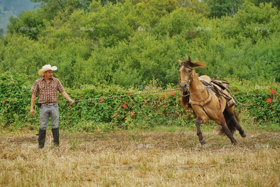 Cowboy Training His Horse