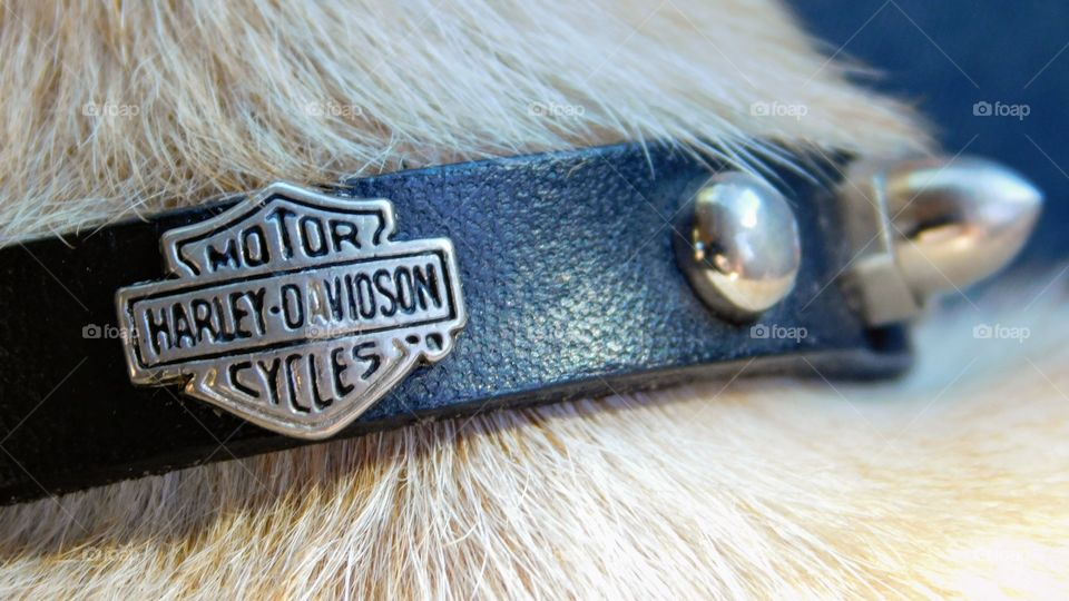 Harley-Davidson Motor Cycles Dog Collar