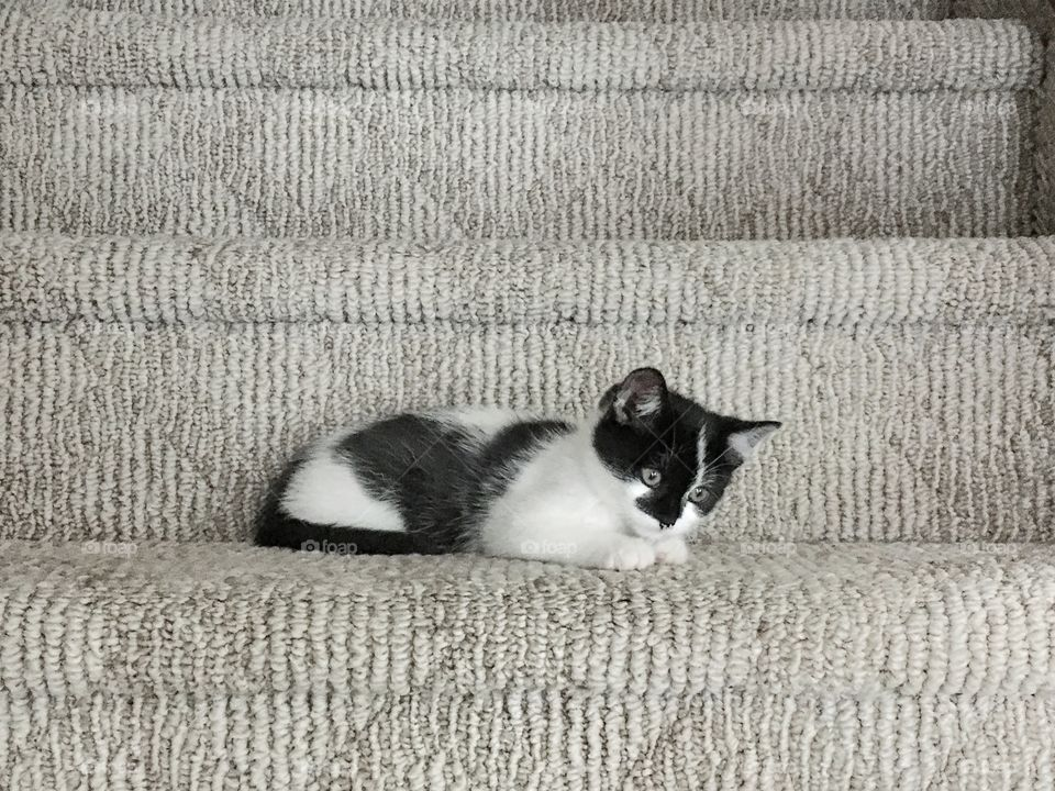 izzie hanging around the staircase