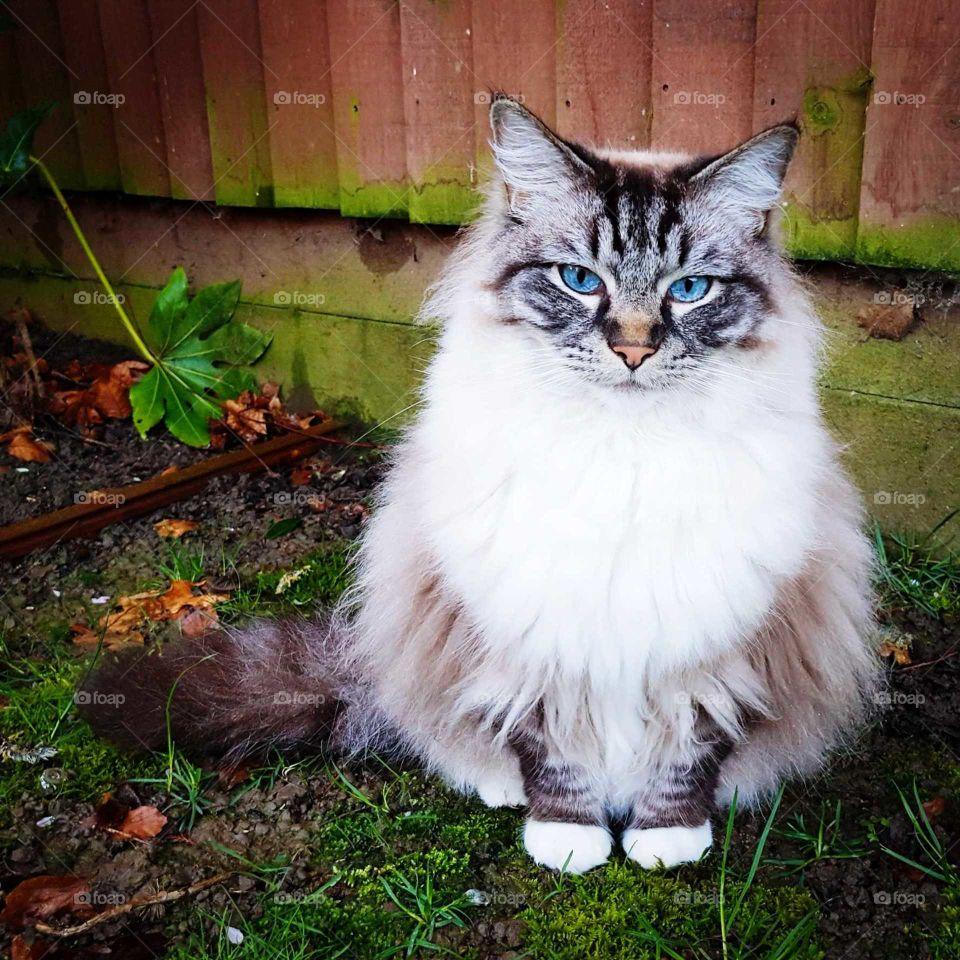 Big fluffy cat sitting in the garden.