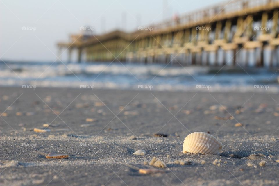 Shells at Cherry Grove Pier North Myrtle Beach, SC June 2015