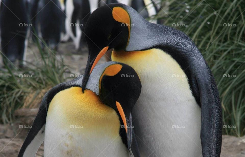 Close-up of penguines