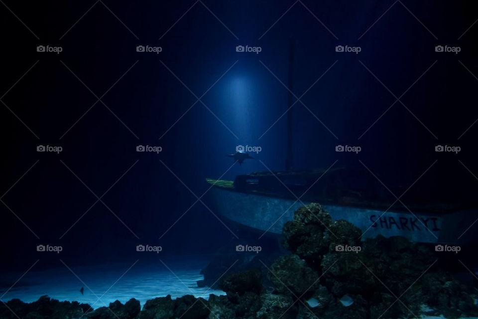 light wreck shark hai by dryair