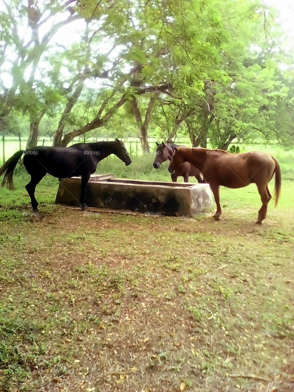 Horse At Water Trough